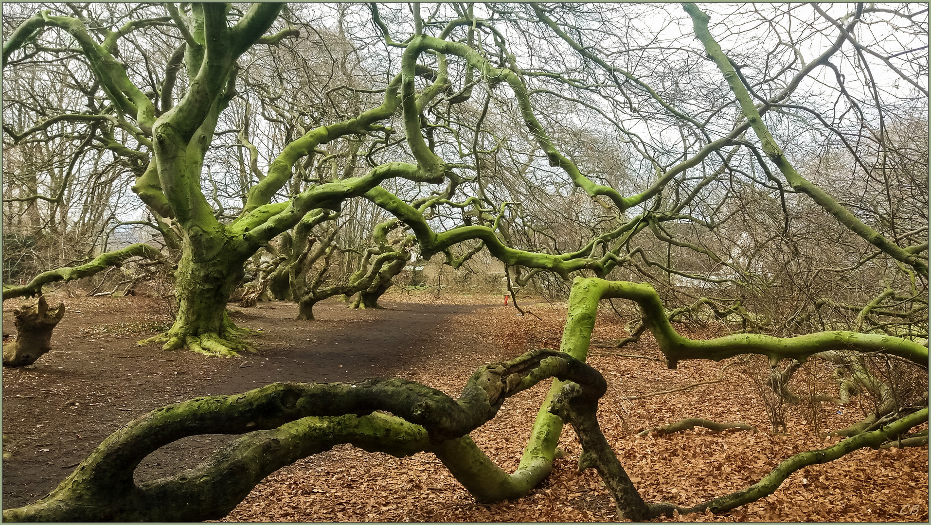 Bäume aus einer anderen Welt