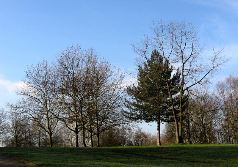 Bäume ....