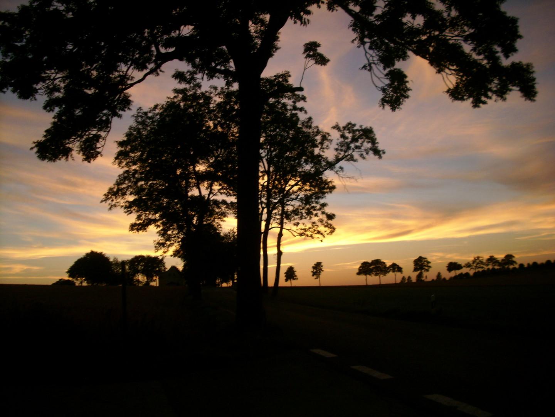 Bäume bei Sonnenuntergang