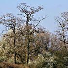 Bäume , Büsche Sträucher ,