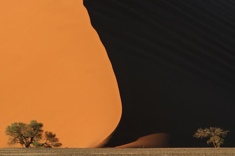 Bäume der Namib