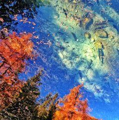 Bäume, die im Wasser träumen