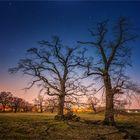 Bäume fotografieren...