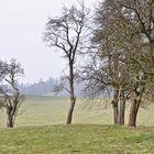 bäume - geborgenheit - ruhe
