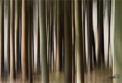 ...Bäume, gewischt...