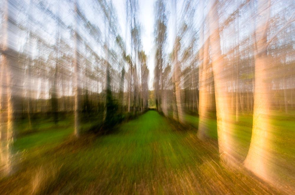 Bäume II