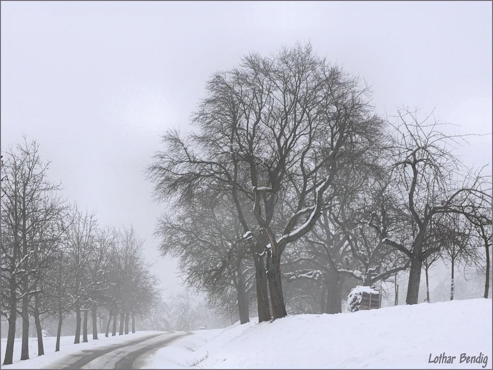 Bäume im Dezembernebel