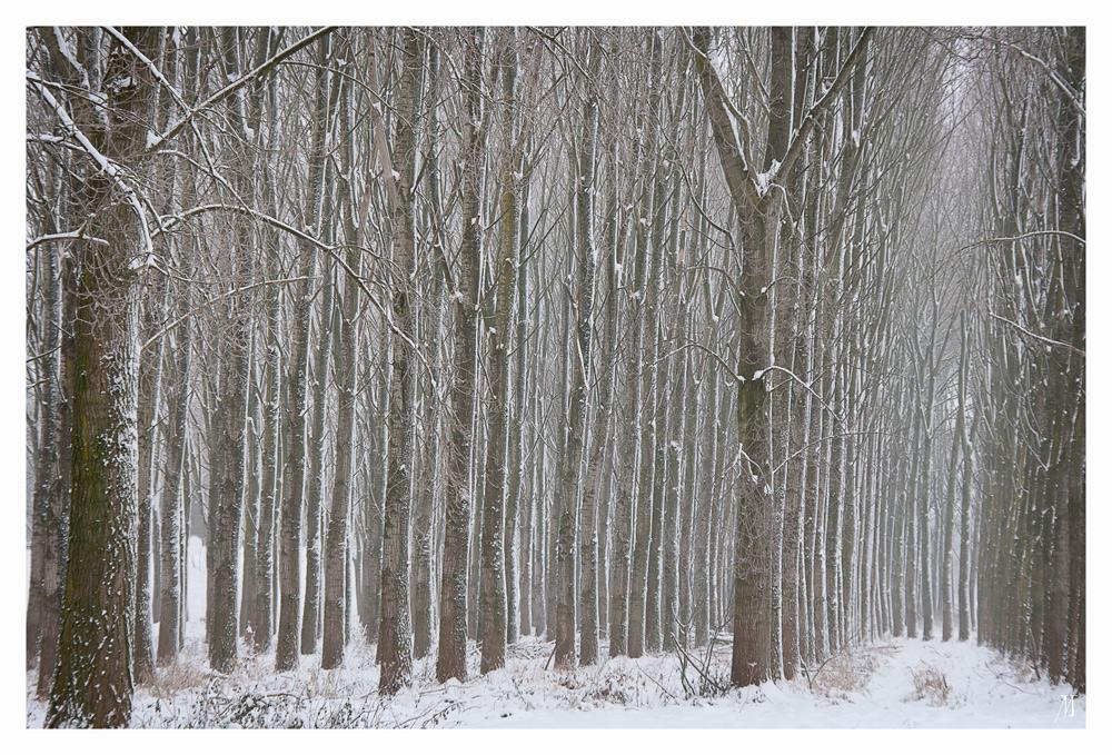 Bäume im Glied