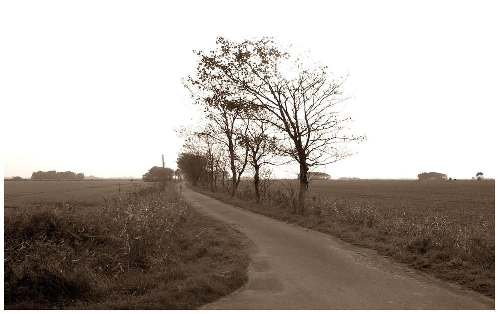 bäume im herbst foto  bild  emotionen melancholie