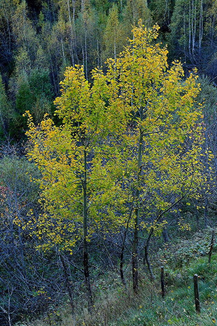 bäume im herbst foto  bild  landschaft lebensräume