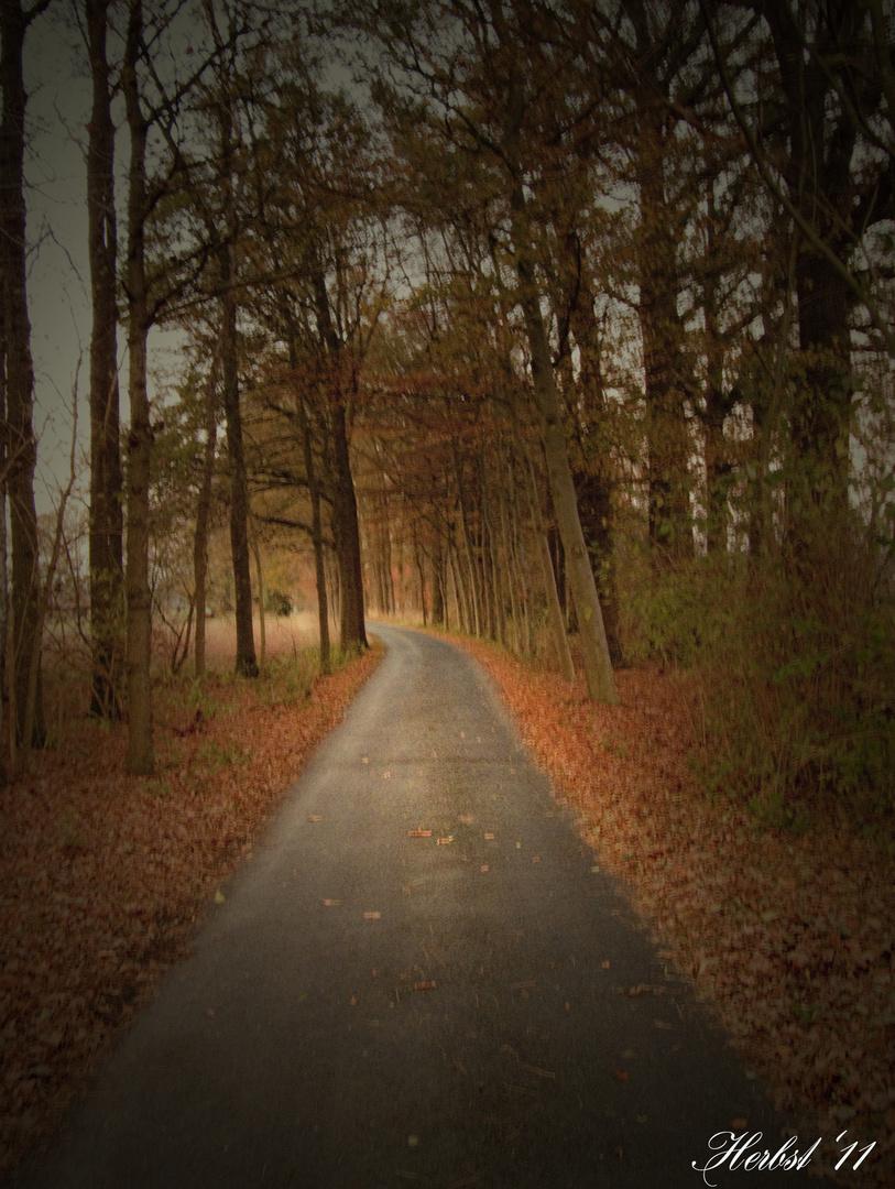 Bäume im Herbst (November 2011)