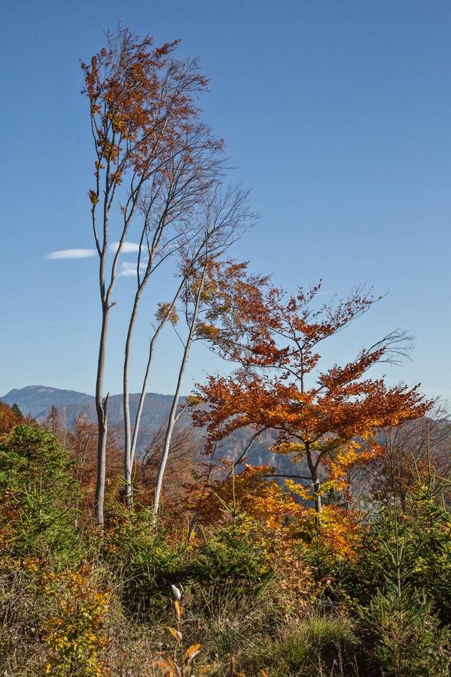 Bäume im Herbstgewand!