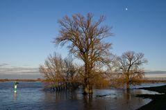 Bäume im Hochwasser