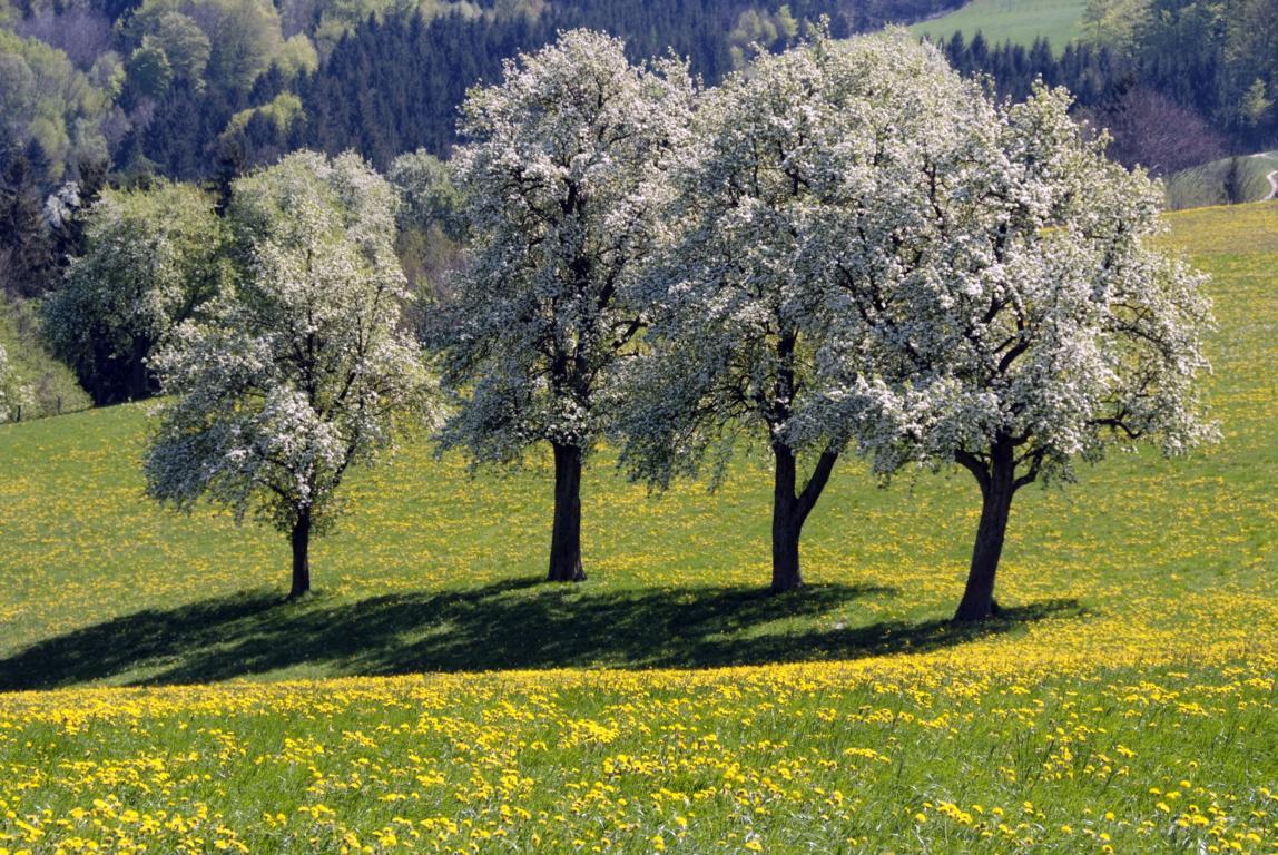 Frühling Bäume