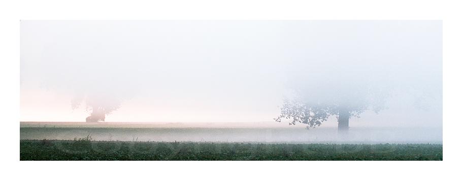 Bäume im Nebel in den Urdenbacher Kämpen