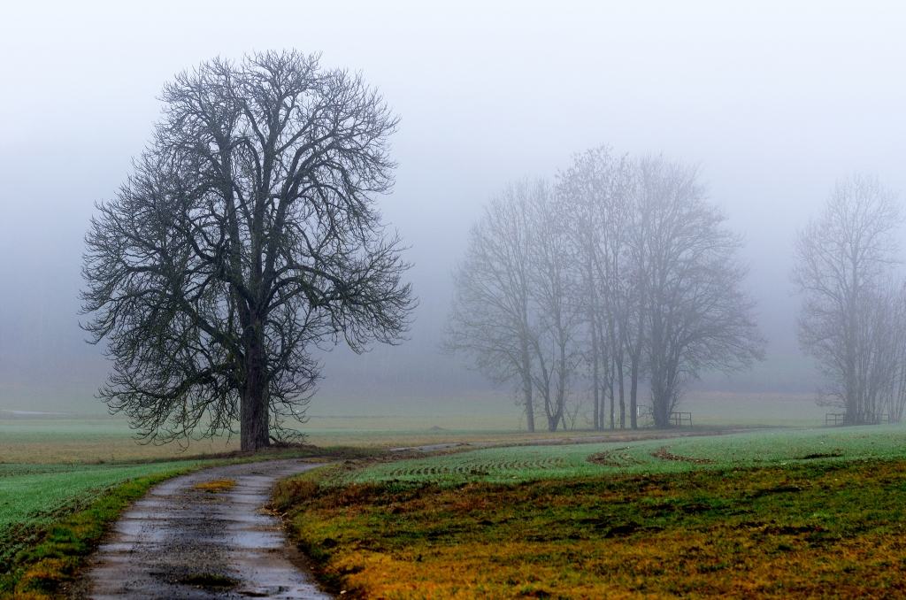 Bäume im Nebel, Trees in the fog, Árboles en la niebla