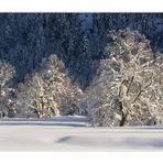 Bäume im Schnee...