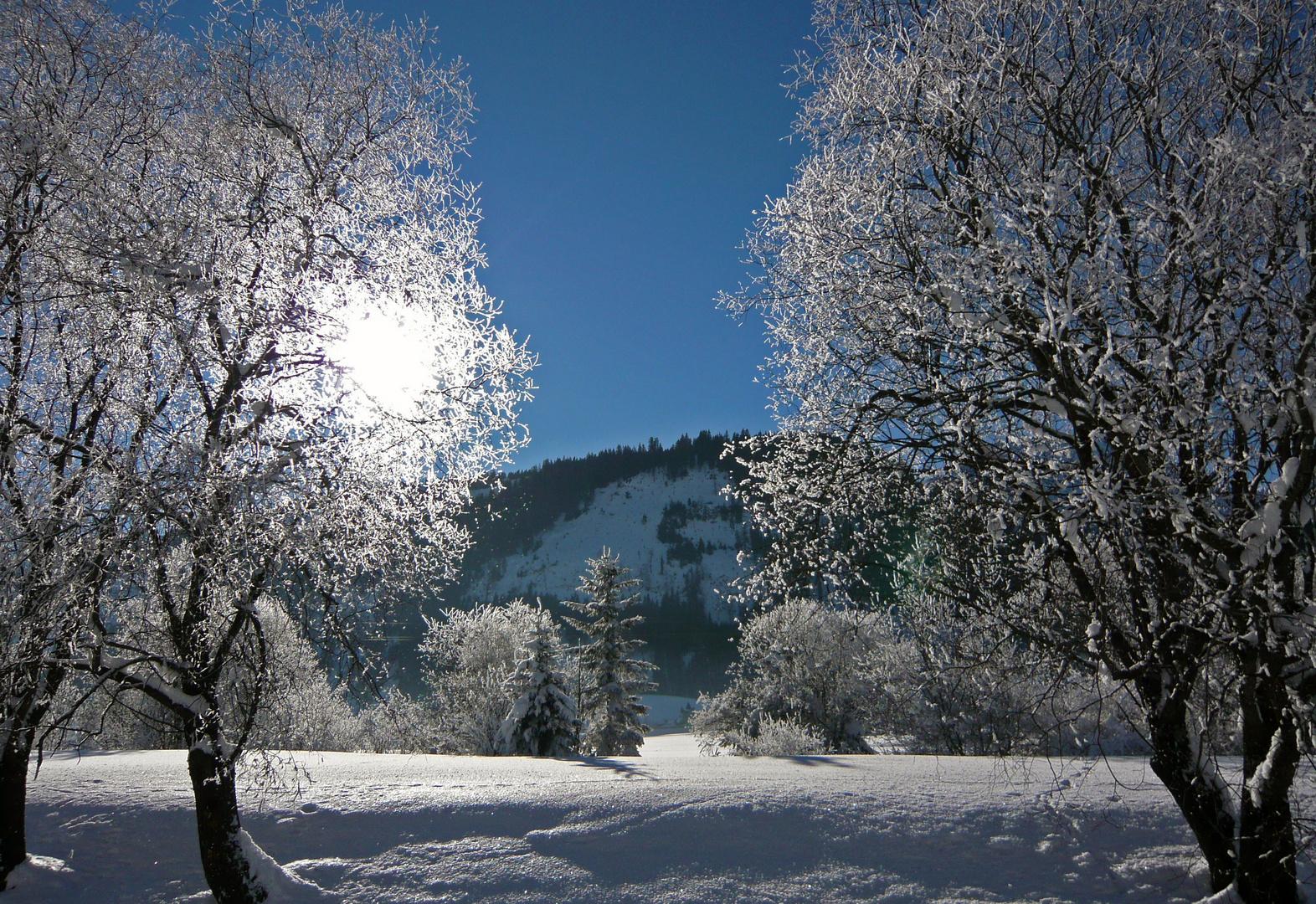 b ume im schnee foto bild jahreszeiten winter landschaften urlaub bilder auf fotocommunity. Black Bedroom Furniture Sets. Home Design Ideas