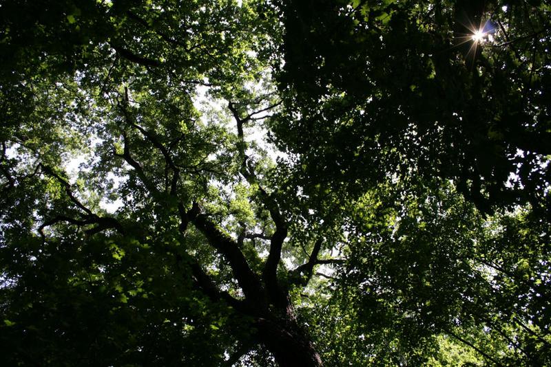 Bäume im Schonbrunn