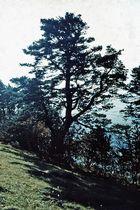 Bäume im Spätherbst – 1