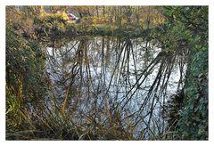 Bäume im Teich