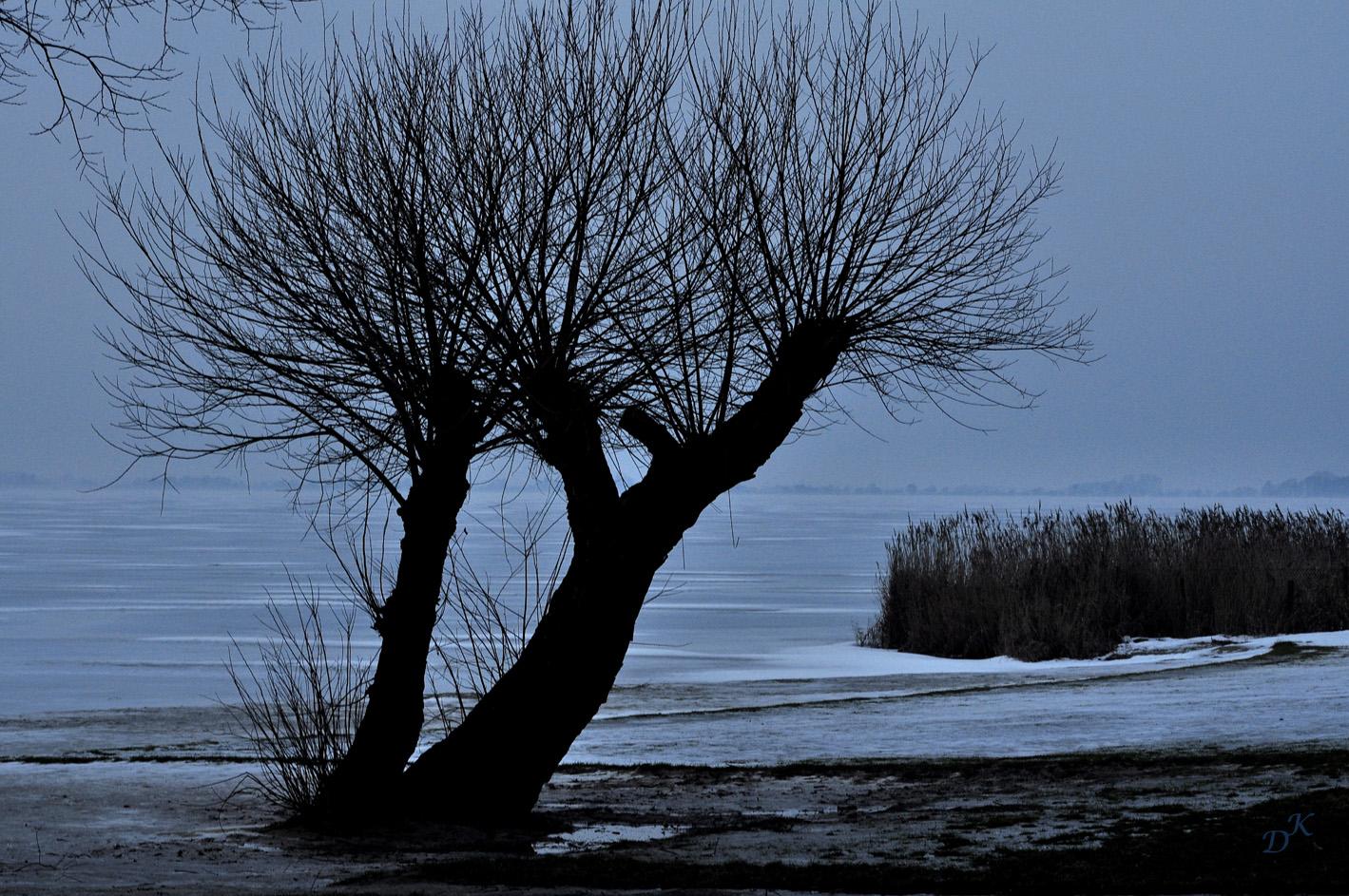 b ume im winter 1 foto bild pflanzen pilze flechten b ume einzelb ume bilder auf. Black Bedroom Furniture Sets. Home Design Ideas