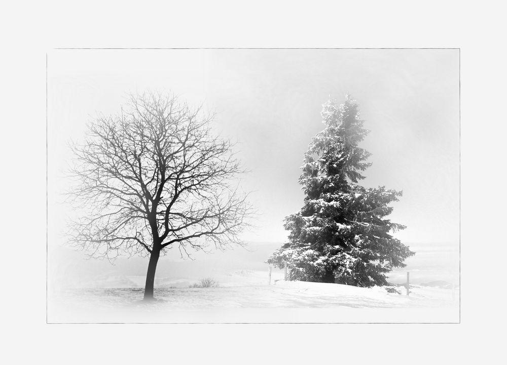 b ume im winter foto bild jahreszeiten winter composings bilder auf fotocommunity. Black Bedroom Furniture Sets. Home Design Ideas