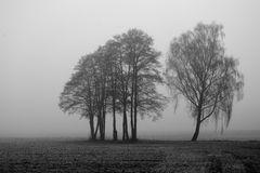 Bäume im winterlichen Nebel