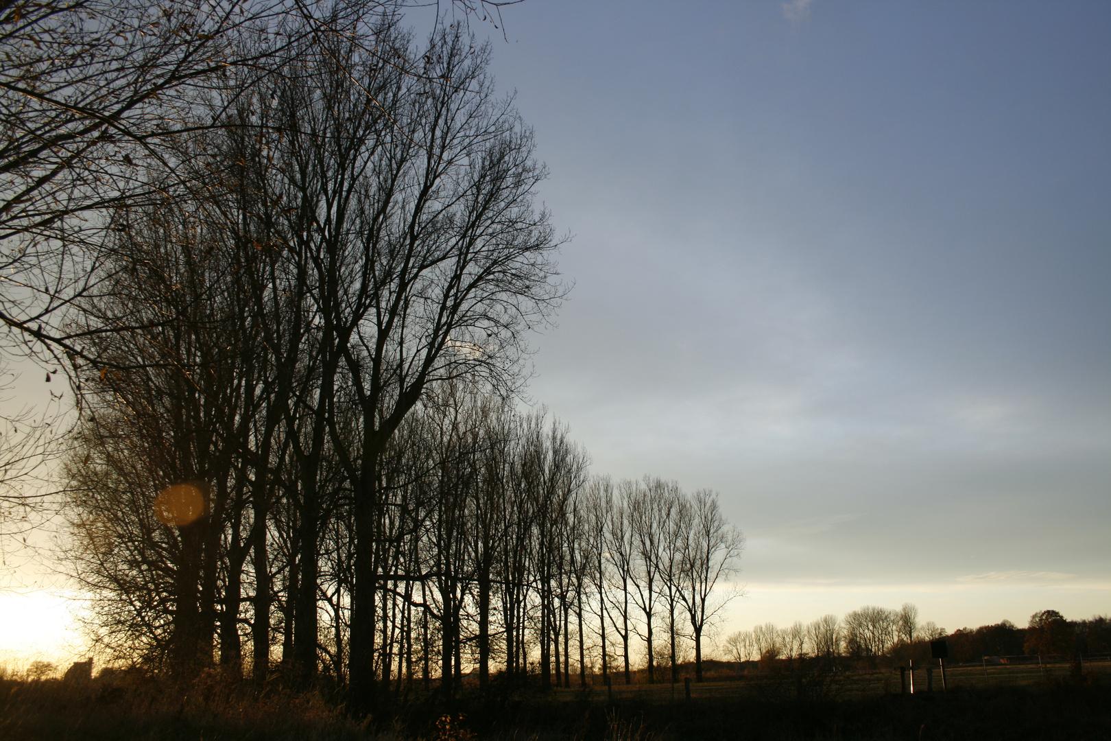 Bäume in Abendsonne