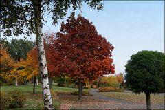 Bäume in allen Farben