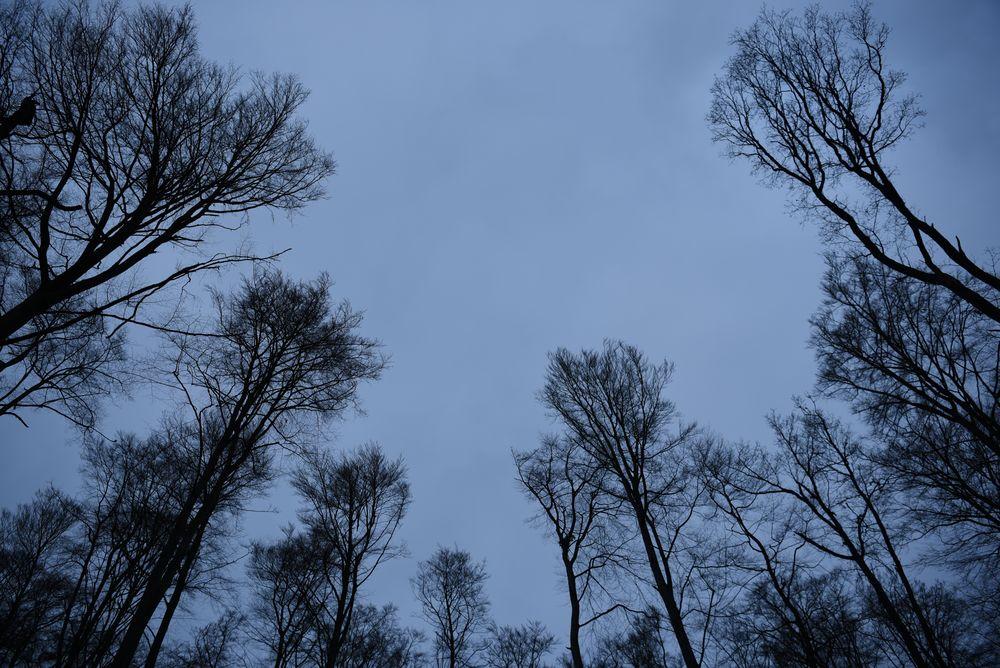 Bäume in der Dämmerung