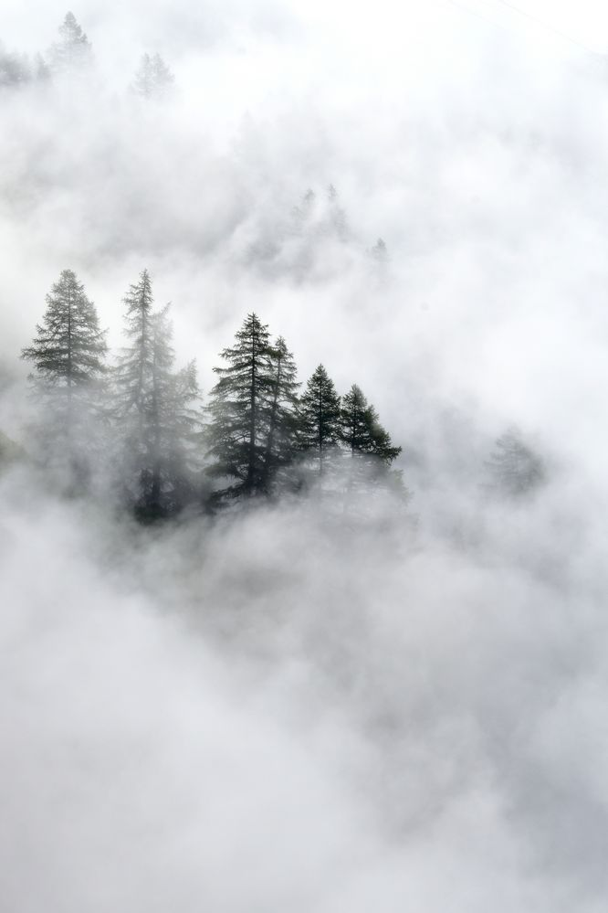 Bäume in Wolken