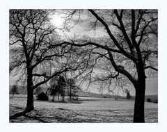 Bäume IV