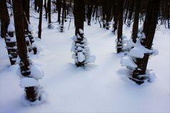 Bäume mit weißen Höschen