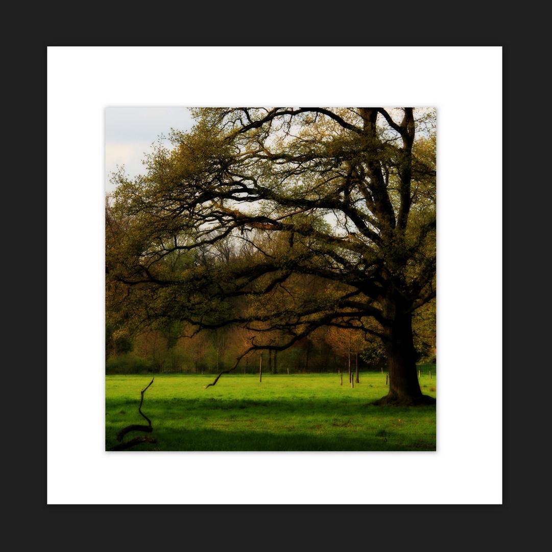 Bäume sind Gedichte