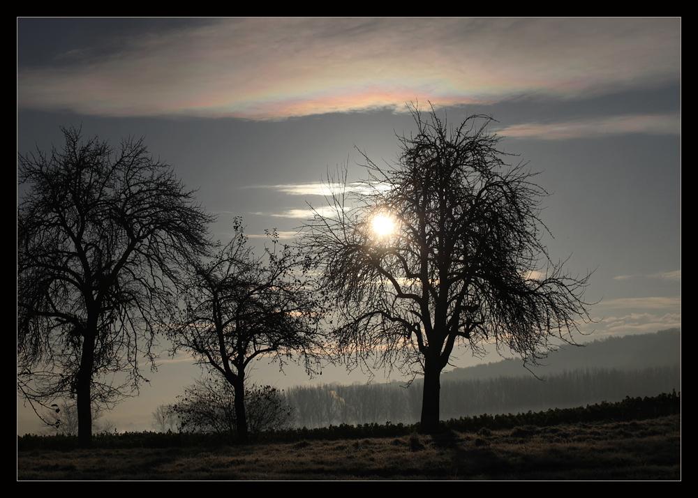 Bäume sind Gedichte...