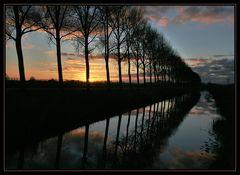 Bäume spiegeln sich am Abend ...