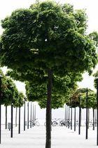Bäume und Räder an der Museumsmeile