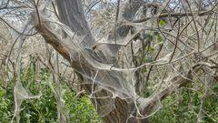 Bäume und Sträucher mit silbriger Hülle