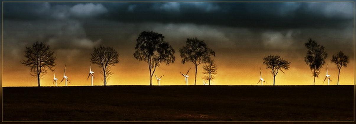 Bäume und Windräder 1
