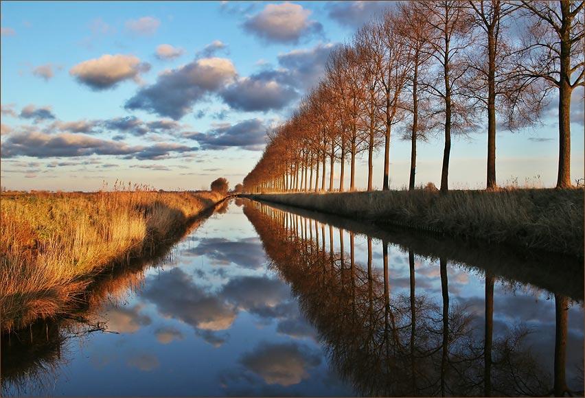 Bäume und Wolken im Spiegel