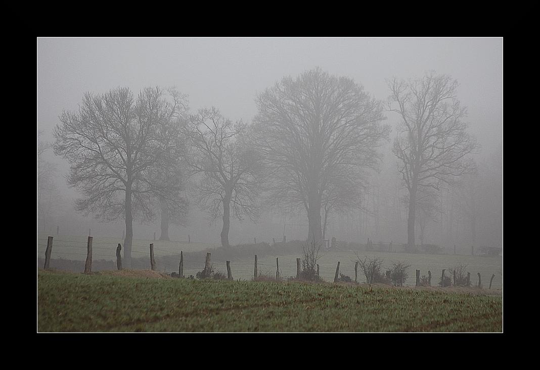 Bäume und Zäune