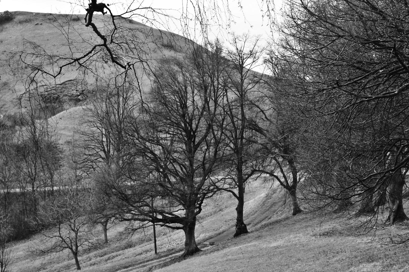 Bäume unter sich