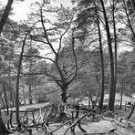 Bäume verbiegen ;-))