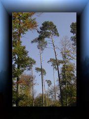 ... Bäume... zum Himmel ... & Text