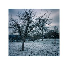 Bäume#01
