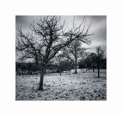 Bäume#02