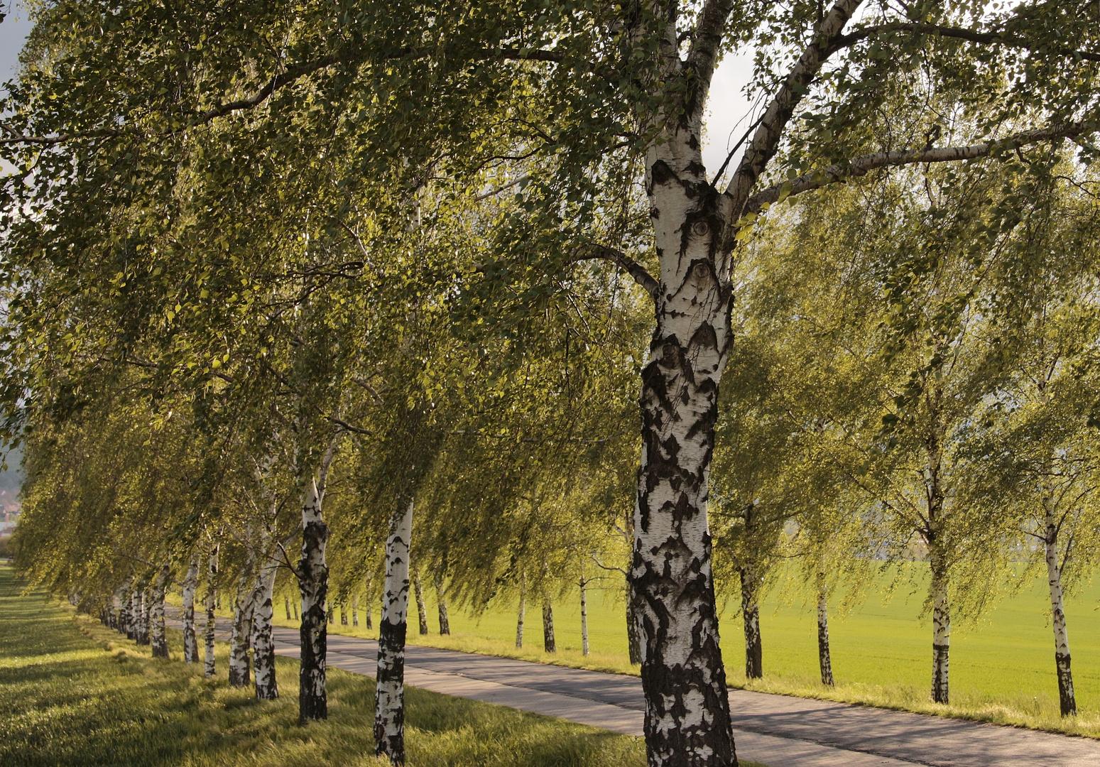 Bäume_Alleen im Harzkreis 056