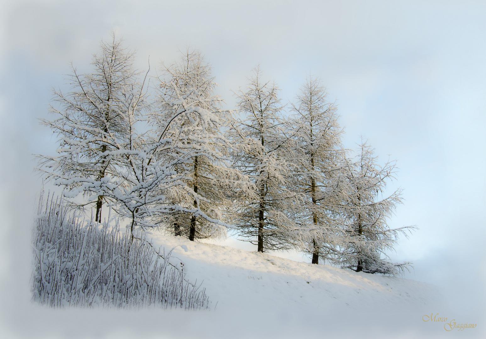 Bäumen und Schnee