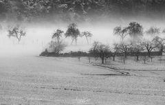 Bäume:Nebel